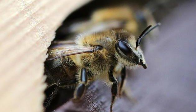 Bienenstich In Der Schwangerschaft